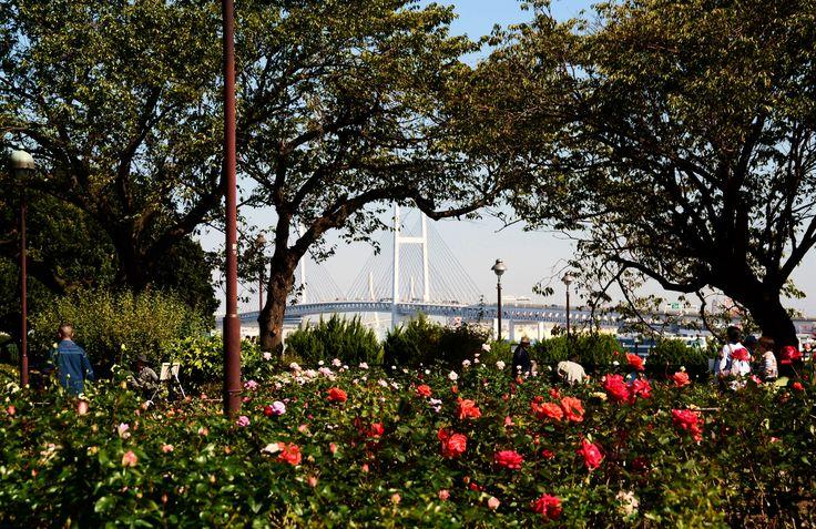 横浜港の見える丘公園にて