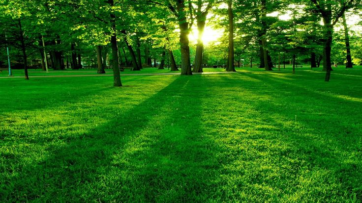 Beautiful Green Green Park Landscape HD Wallpapers for