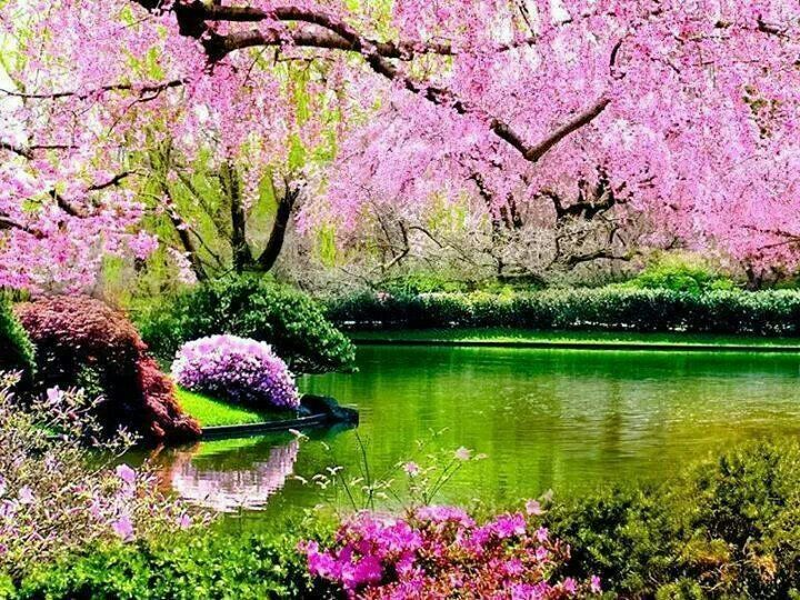 Pretty in Pink | NATURE scenes | Springtime pictures ...