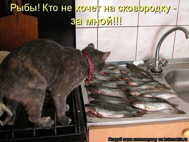 Смешная картинка продам рыбу, открыток пошагово инструкция