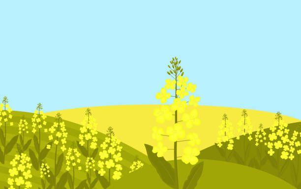 無料イラスト春夏秋冬 ベストセレクション 菜の花 畑
