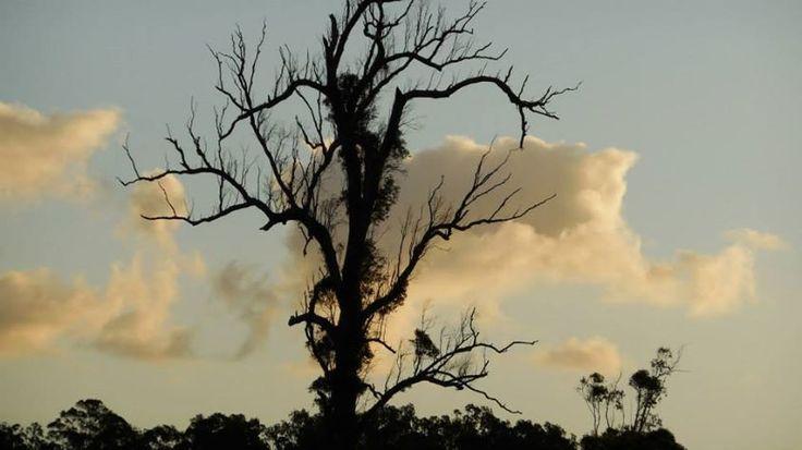 The Magic Tree :-P