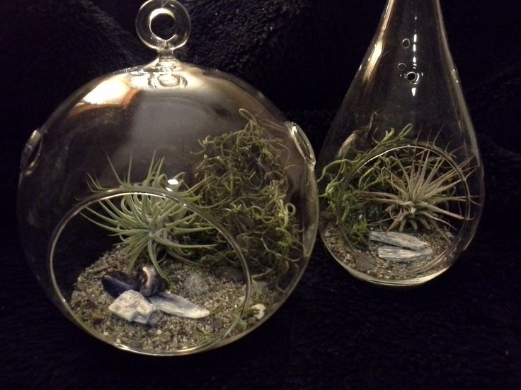 A set of beautiful hanging Airplanters...... Tillandsia's set on ocean beach sand & pebbles with a backsplash of moss & touched with a couple slices of blue denim natural stone chips. Mist them a couple times a week and you are good to go!...........................$25.00/set deansbaskets@gmail.com OR 604.603.5829  *you can find me on Facebook :)