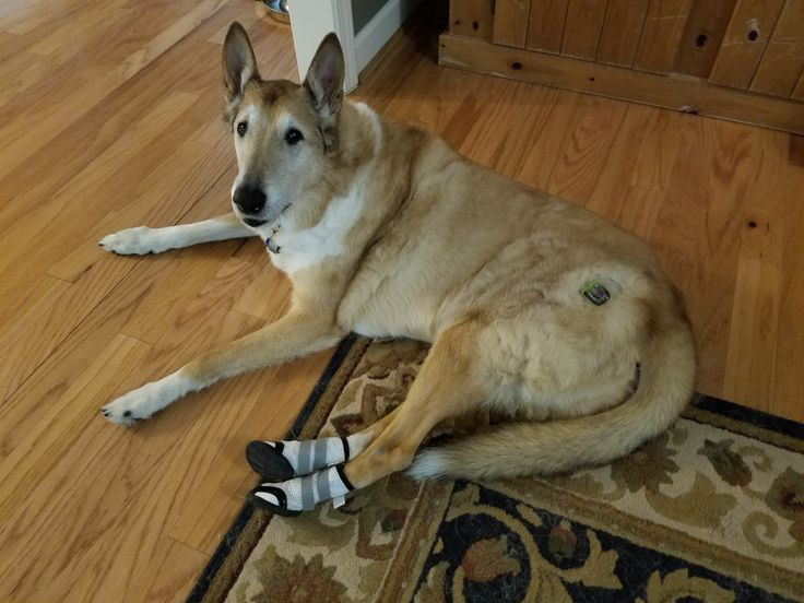 18 Best Images About Orthopedic / Non Slip Dog Boots