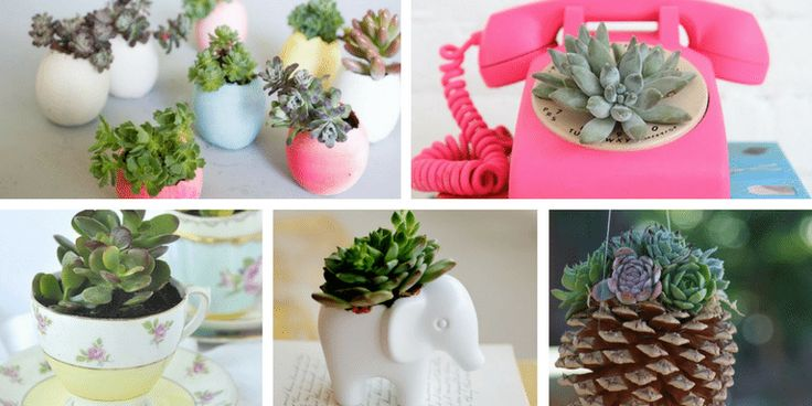 Are you also obsessed with succulents? There are so many fun ways for planting and displaying your succulents. Check out our favorites from Pinterest!