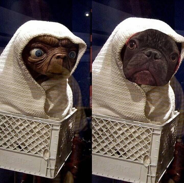 I DID THIS WITH MY BOXER AT BATH TIME AND THOUGHT THE SAME THING...SO CUTE