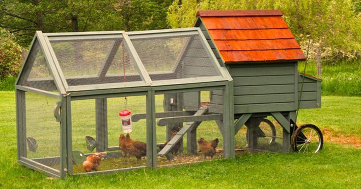 Empresa exibe 'galinheiro móvel' em cidade nos EUA