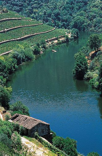 Douro Valley, #PortWine vineyards #Portugal
