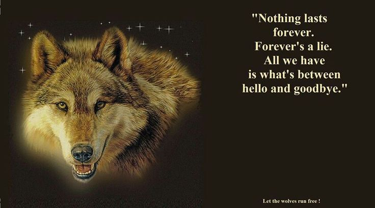 Let the wolves run free