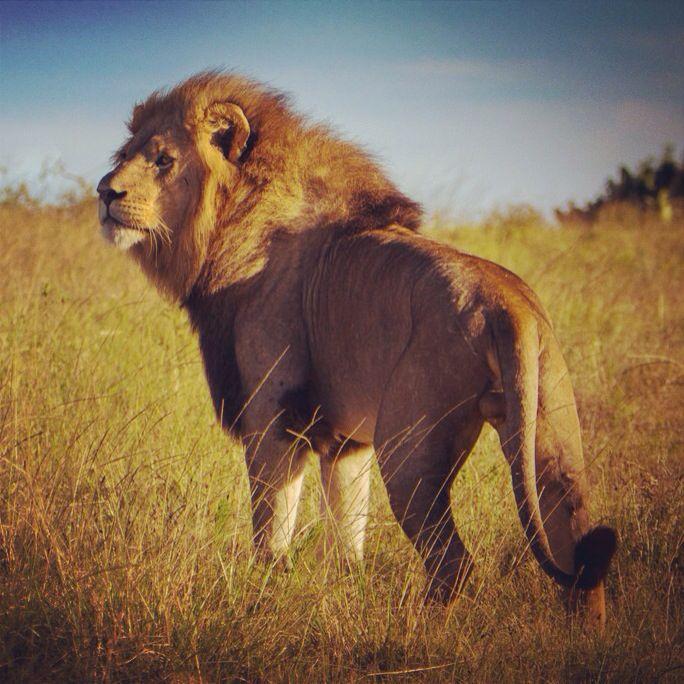 Kruger National Park...