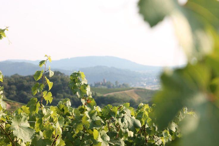 Ortenau - Blick auf Schloss Ortenberg Weinwandern
