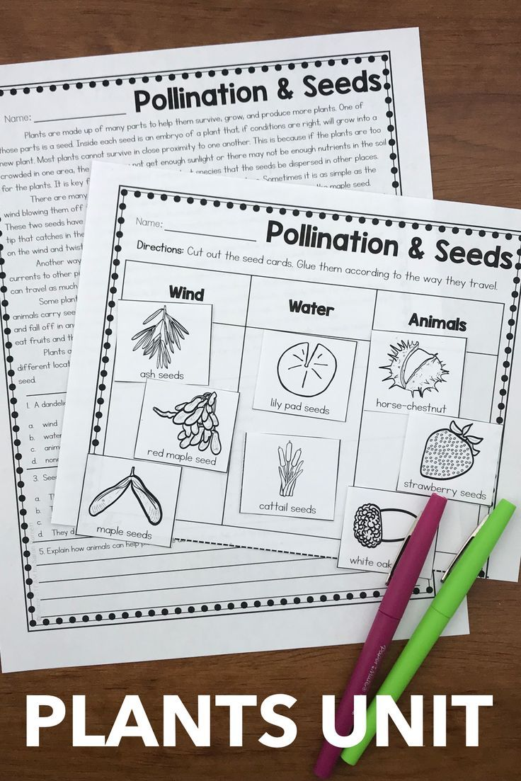 Activities For Plant Life Cycle For 2nd And 3rd Grade Printable Includes Seque Elementary Science Activities Reading Comprehension Passages Elementary Writing