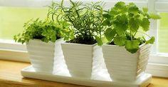 Voici 10 plantes qui attirent les énergies positives