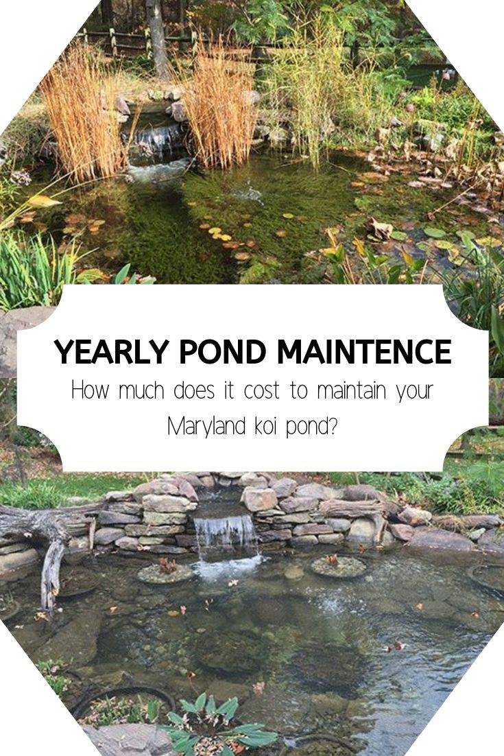Your Pond Maintenance Cost For This Year 2019 Update Pond