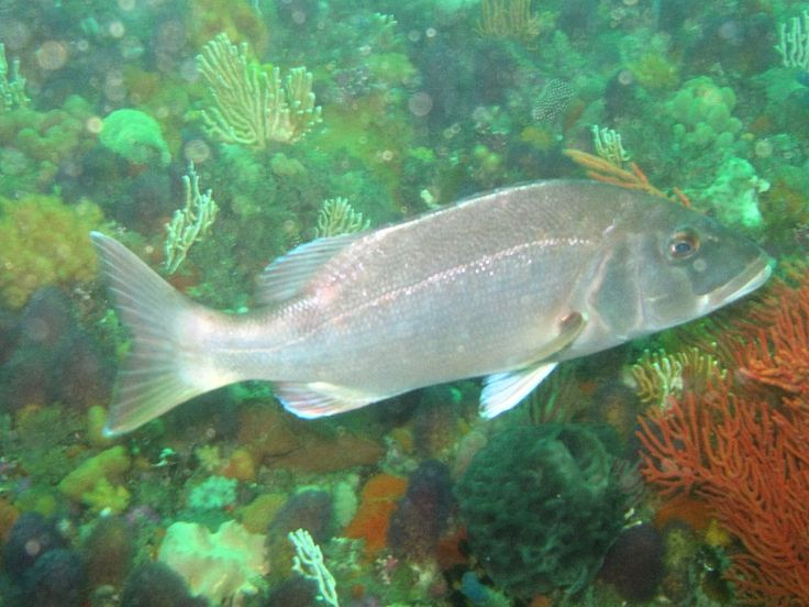 17 Best Images About Fish In South African Waters On