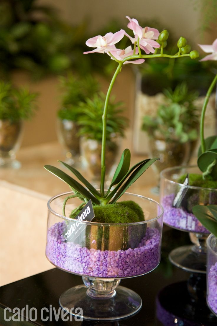Composizione pianta di orchidea in vaso di vetro impreziosita da mini ciottoli lilla.carlocivera.org #piantaorchidea