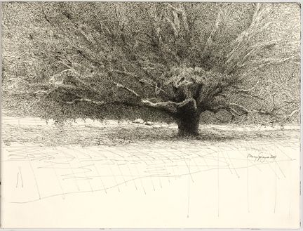 Mary Sprague: Trees Art, Trees Drawings, Spragu Pens, Artists Info, Mary Spragu, Artists Work, Artists Mary, Oak Trees, Pens And Ink