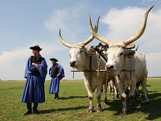 Hungarian herders