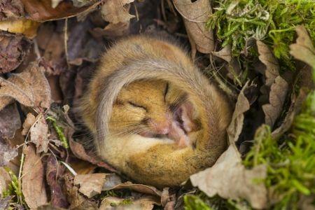 Love animal photos? Enter the British Wildlife Photography Awards 2013.