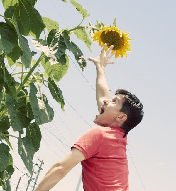 Life Lessons from a Sunflower | Beekman1802.com: Beekman1802 Com, Life Lessons, Beauty Beekman, 1802 Farms, Beekman 1802