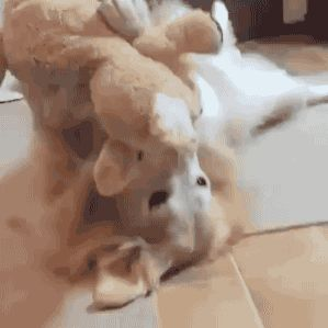 Share this Happy Dog With Her New Toy Animated GIF with everyone. Gif4Share is…