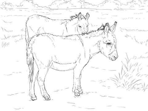 two donkeys coloring page from donkeys category select from 25105 printable crafts of cartoons nature animals bible and many more