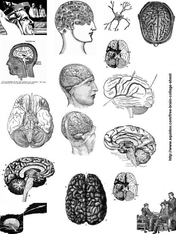 Free Printable Digital Collage Sheet with Vintage Brain Diagrams and Images