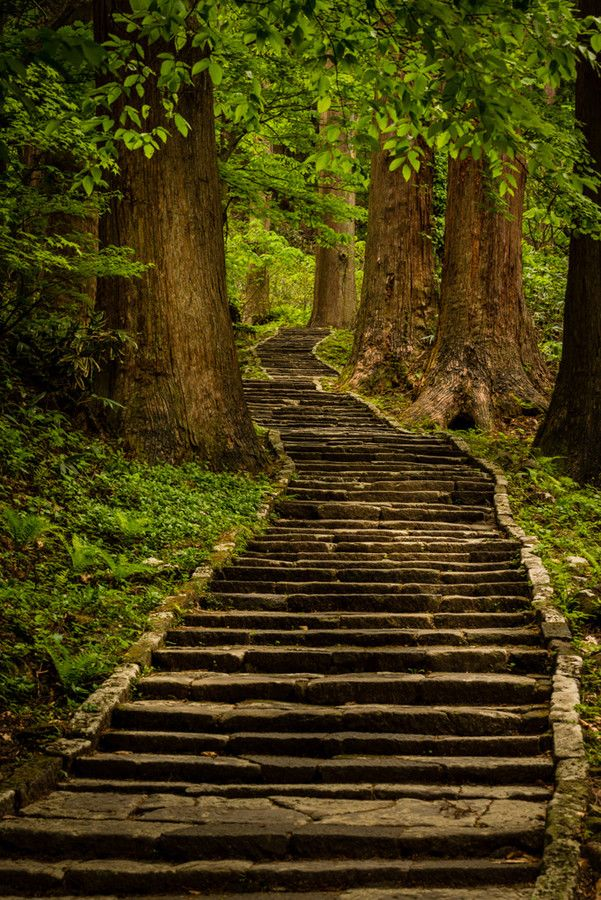 Stairway To Heavens Temple - Northern Japan Dark Forest