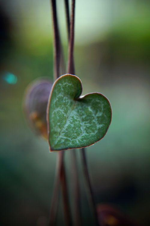 « Cherche la Sagesse dans la simplicité du coeur. », It's all about Hearts ♡