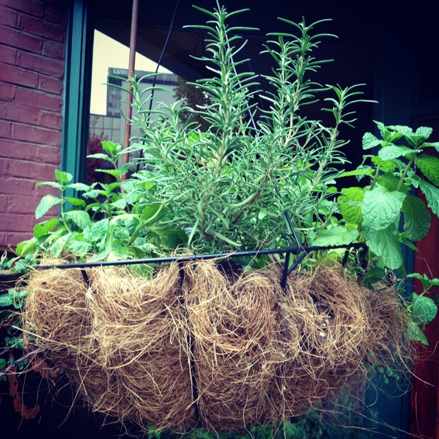 Basket of mint and rosemary.