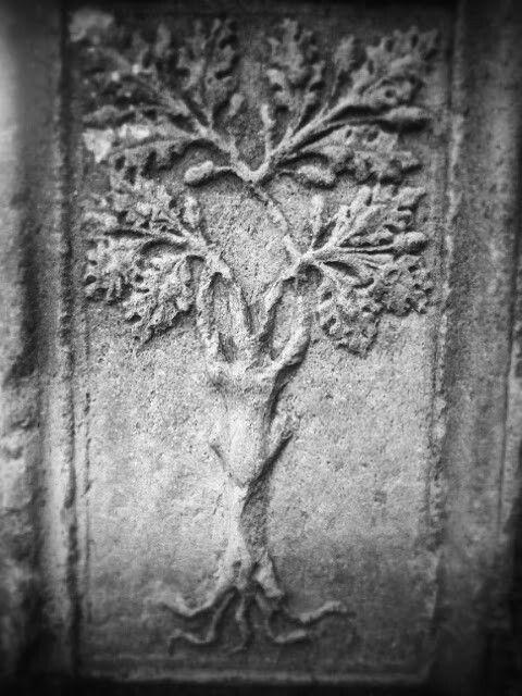 La quercia: simbolo dei Della Rovere
