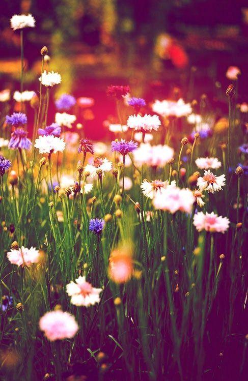 Trouvailles Pinterest: Bonheur et fleurs