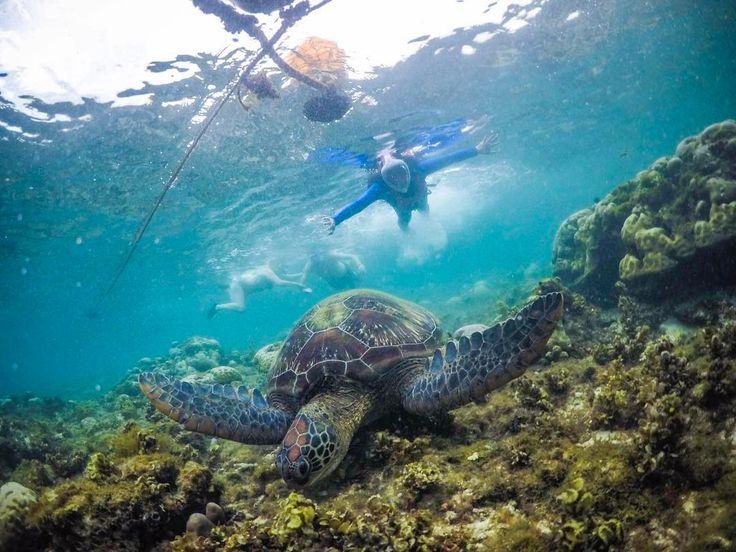 Hey Dumaguete! Stalking.  #nature #sea#gopro #corals #turtle #underwater @goproph #travel #islandlife