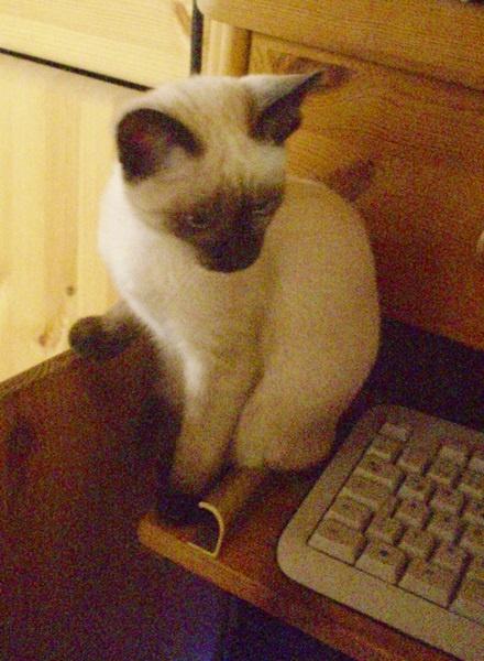 Tiffany - neben meiner Tastatur - urgs