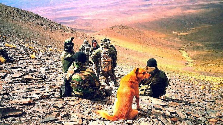 De Cabo a Sargento: el increíble perro del Ejército que fue ascendido – AB Magazine