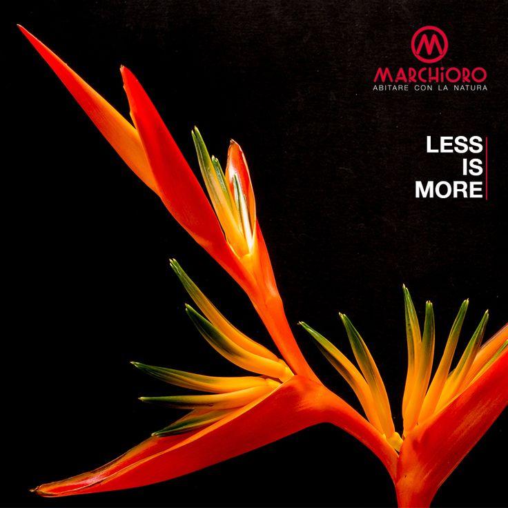 LESS is MORE #marchioro #giardino #animali #garden #pet