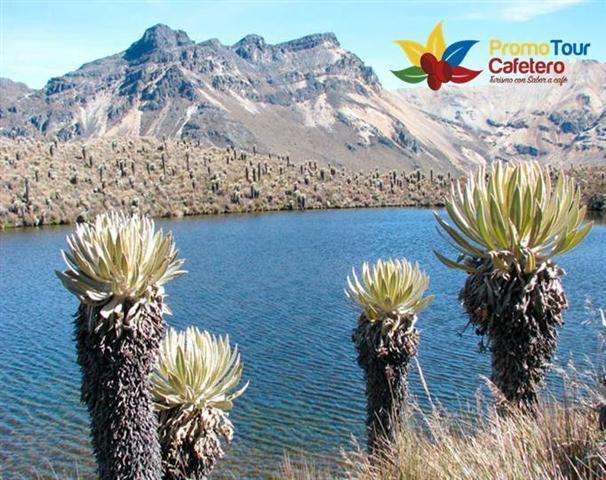 Expedición al Parque los Nevados donde se maravillaran de la majestuosidad de las montañas andinas y sus volcanes glaciares, además de su ecosistema, el PNN Los Nevados - Nevado Santa Isabel y laguna del Otun. Plan de 2 días (SALIDAS TODOS LOS DIAS), saliendo a las 4:30am Incluye: transporte, alimentación, refrigerio, alojamiento, entrada al parque nacional los Nevados, guía especializado, caminata día 1 laguna del Otún, Nevado Santa Isabel , Ruta del Condor, (Reserva tu Cupo)