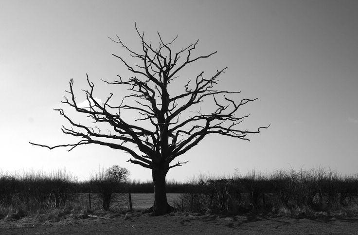 old dead tree | Flickr - Photo Sharing!