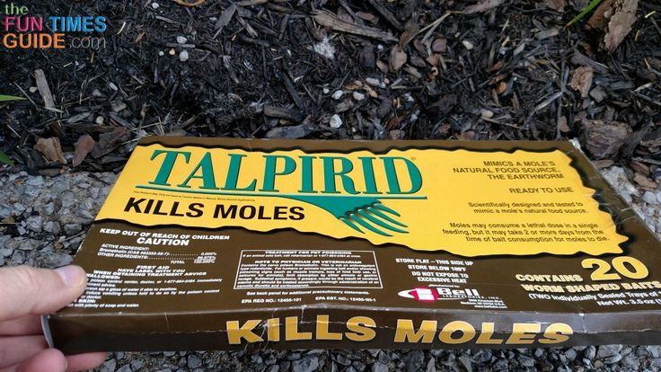 How To Get Rid Of Moles In Your Yard: The Ultimate Guide ...