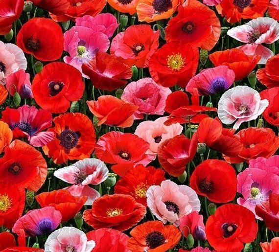 0 5m Mohn Blumen Bw Stoff Mohn Rot Mohnblume Mohn