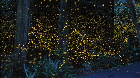 enchanting forest in the chūgoku region of japan. home to gold fireflies that charm the area regularly. magical.