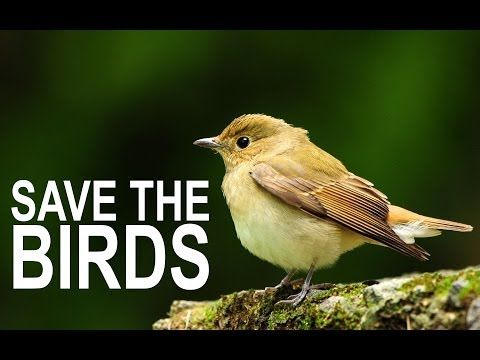 save birds Habitat discount card – participating businesses habitat discount card  10% off bird feed, 20% off birdfeeders and supplies  general life is good.