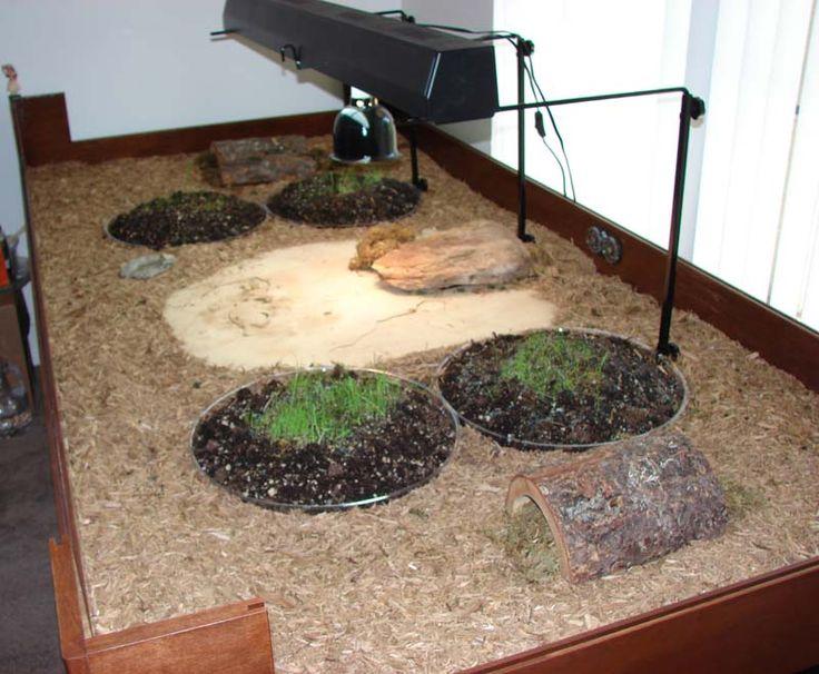 Pet Turtle Habitat