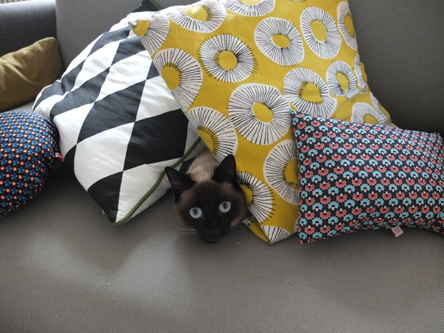 {pillow eyes}Siamese Eye, Pillows Eye, Cat Obsession, Funny Stuff, Beautiful Siamese, Homey Things, Cats Siamese, Animal Cat, Feline Face