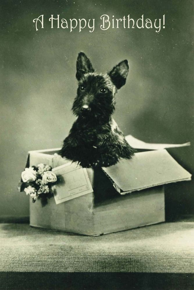 Scottish Terrier Dog Gift Box Vintage Photo LARGE New Blank BIRTHDAY Note Cards in Collectibles, Animals, Dogs | eBay