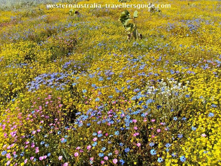 Western Australian wild flowers on display in Kings Park. Click on the image to discover the Top 5 Things to do in Perth.