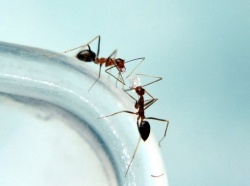 Get rid of ants in the kitchen with three ingredients.