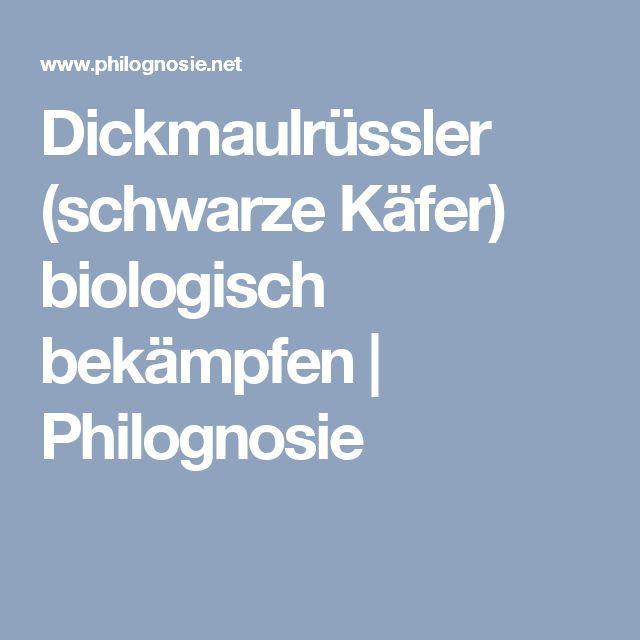 Dickmaulrüssler (schwarze Käfer) biologisch bekämpfen   Philognosie