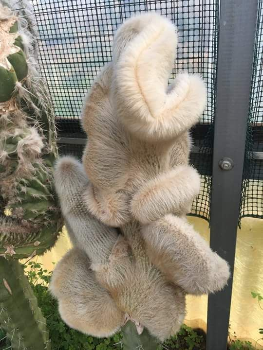 This looks like a sloth or some weird creature hanging there... but it's a plant!