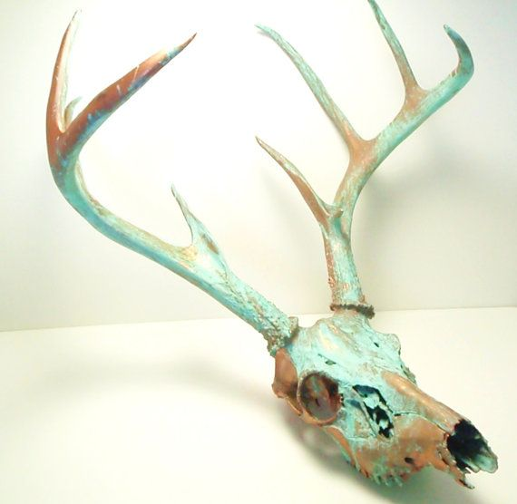 400$ Hey, I found this really awesome Etsy listing at https://www.etsy.com/listing/216592706/copper-natural-patina-deer-skull-antlers